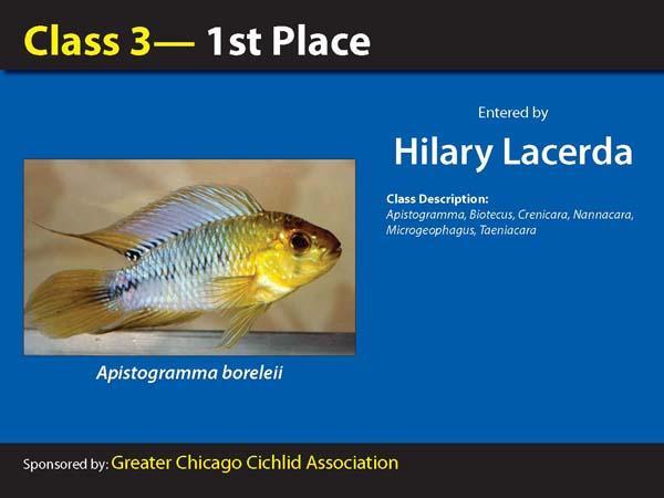 aca2006_winners_014.jpg
