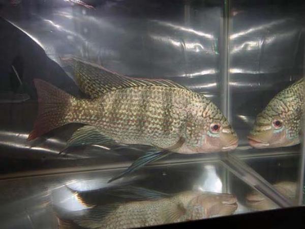 aca2006_fish_038.jpg