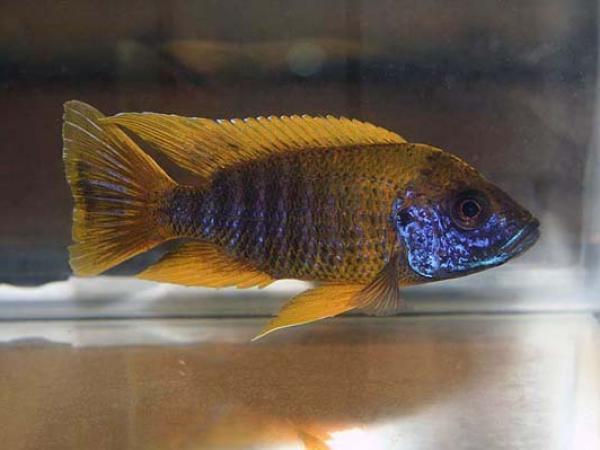 aca2006_fish_052.jpg