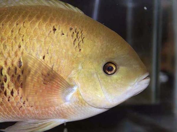 aca2006_fish_012.jpg