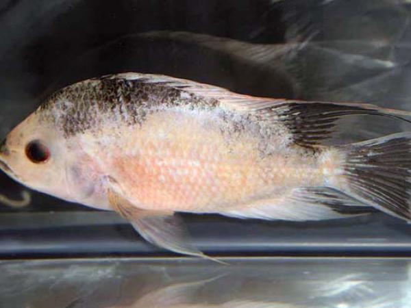 aca2006_fish_032.jpg