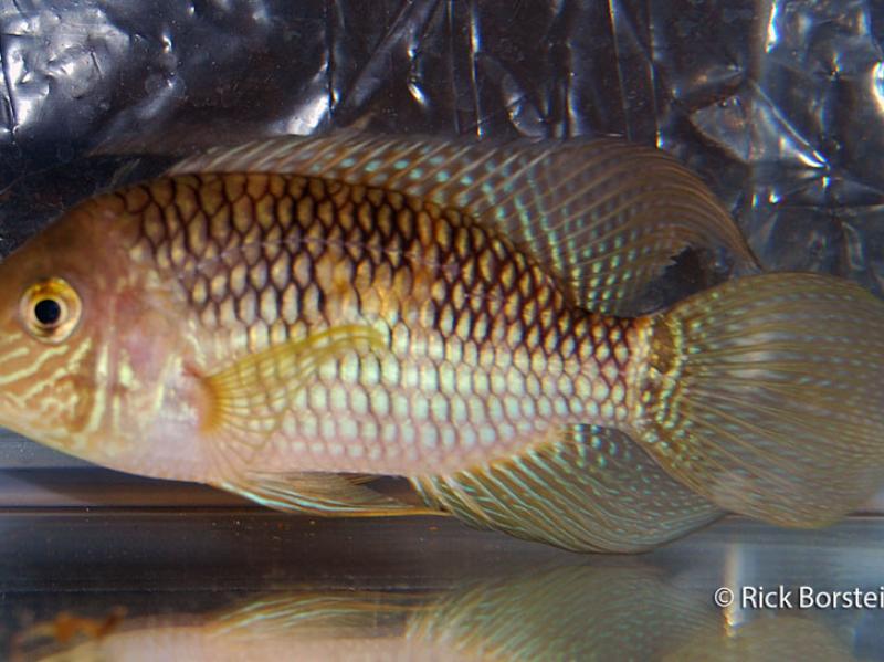 show_fish_2012_001