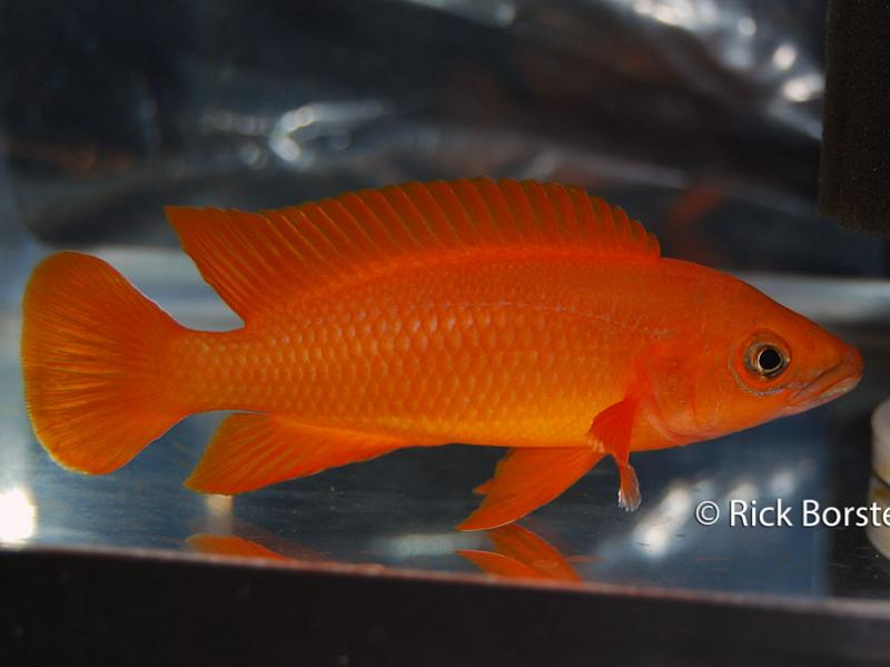 show_fish_2012_002