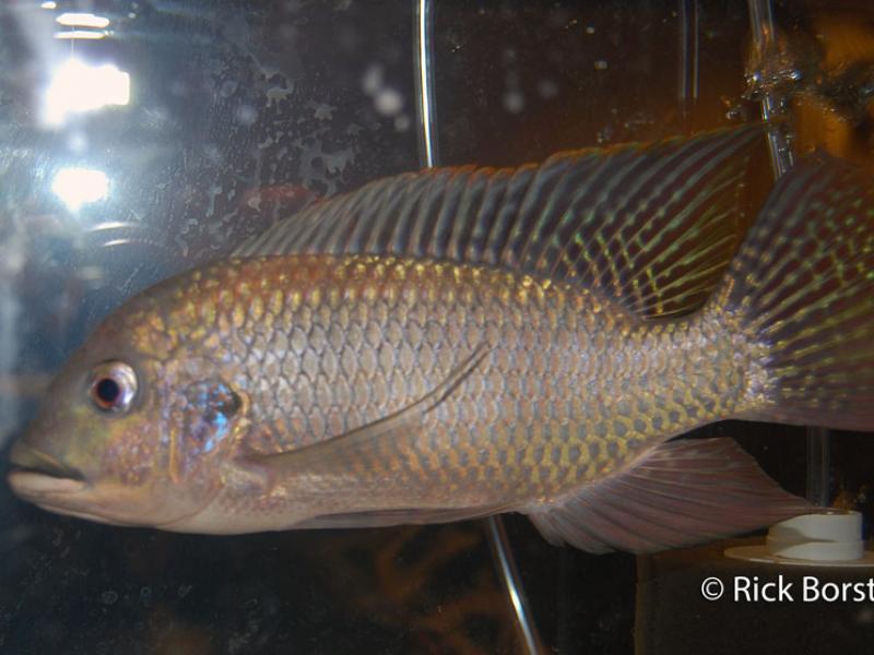 show_fish_2012_015