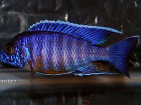 show_fish_2012_005