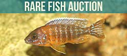 Rare Fish Auction