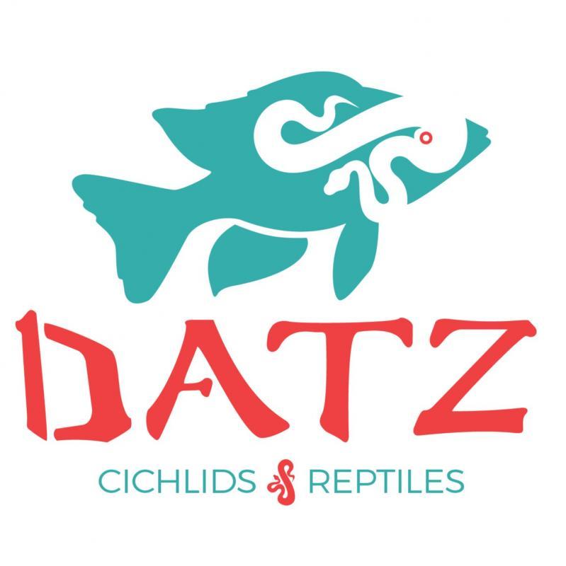 Datzcichlids & Reptiles