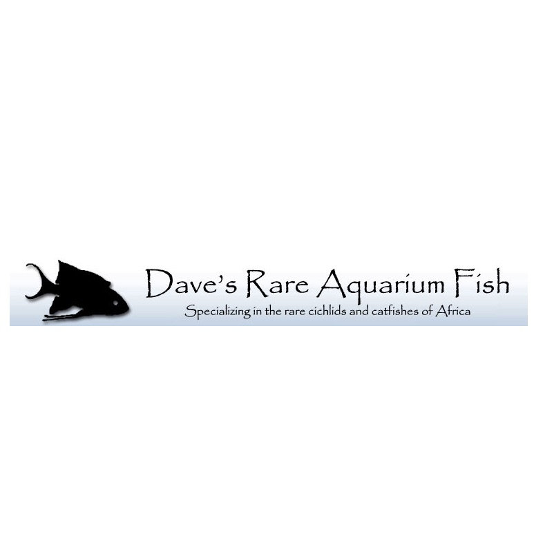 Dave's Rare Fish