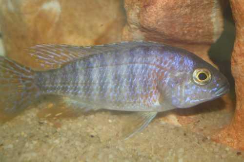 Fish12-15006.JPG
