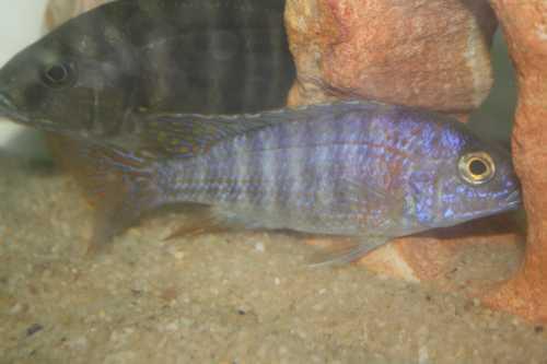 Fish12-15008.JPG