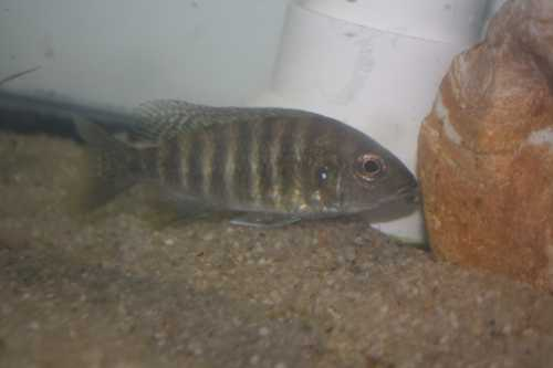 Fish12-15010.JPG