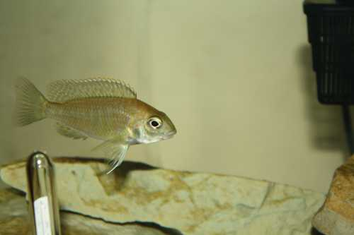 Fish12-16018.JPG