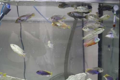 Fishroompic051.JPG