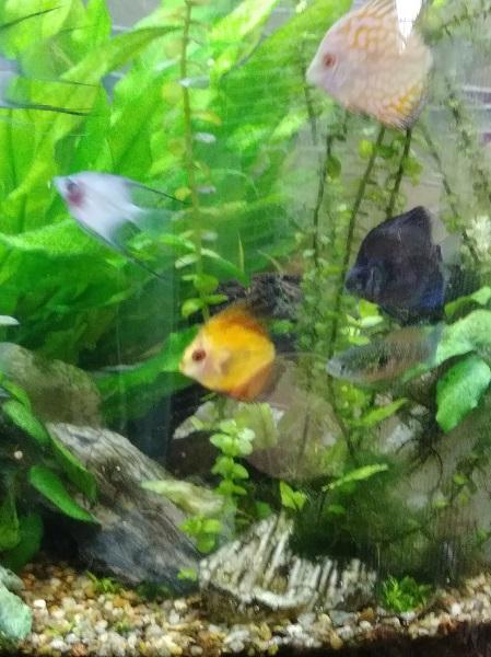 tankfish_2020-09-18.jpg