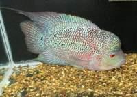 Kamfafish's Avatar