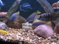 Fishfoolery's Avatar