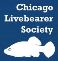 chicagolivebearer's Avatar